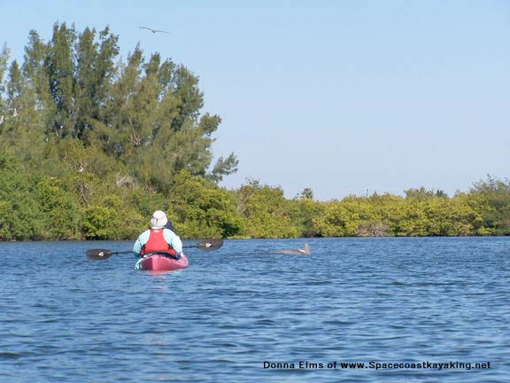 Kayaking In Thousand Islands Florida